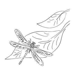 Насекомые стрекоза картинки раскраски (53)