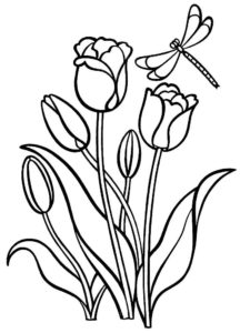 Насекомые стрекоза картинки раскраски (8)