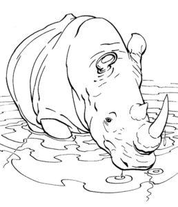 Носорог картинки раскраски (11)