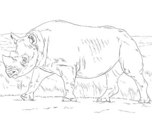 Носорог картинки раскраски (19)