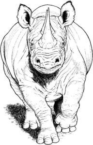 Носорог картинки раскраски (20)