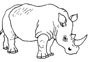 Носорог картинки раскраски (35)