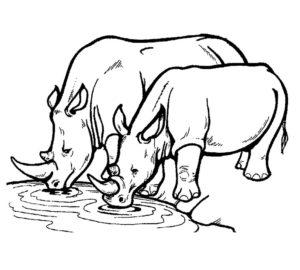 Носорог картинки раскраски (36)