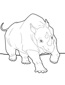 Носорог картинки раскраски (38)
