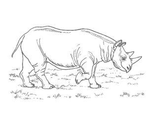 Носорог картинки раскраски (40)
