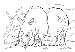 Носорог картинки раскраски (41)