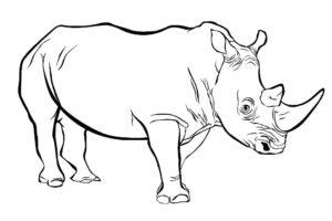 Носорог картинки раскраски (50)