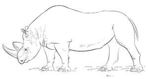 Носорог картинки раскраски (51)