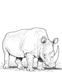 Носорог картинки раскраски (53)