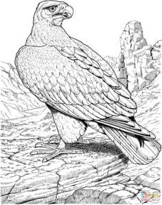 Орел картинки раскраски (10)