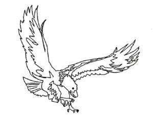 Орел картинки раскраски (11)