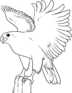 Орел картинки раскраски (13)
