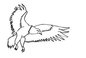 Орел картинки раскраски (15)