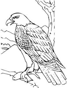 Орел картинки раскраски (17)