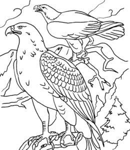 Орел картинки раскраски (18)