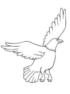 Орел картинки раскраски (2)