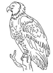 Орел картинки раскраски (20)