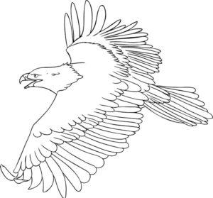 Орел картинки раскраски (21)