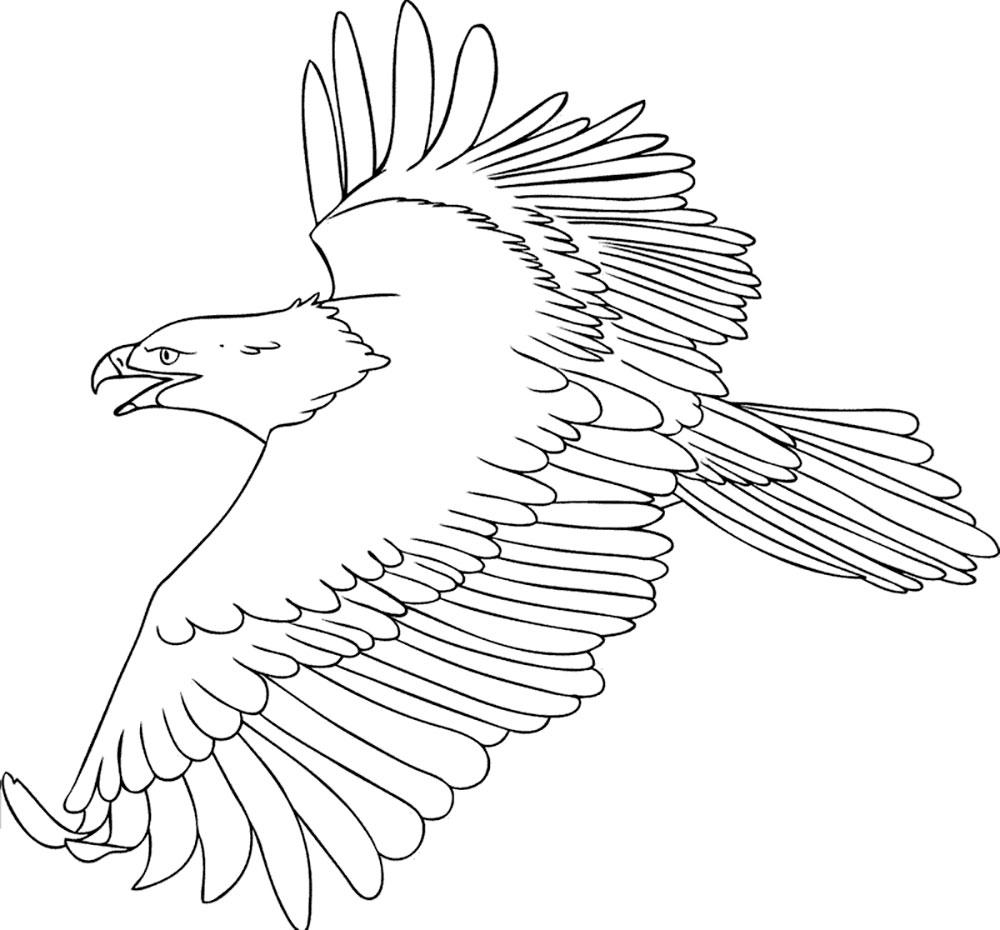 рисунок орла в полете приятно читать