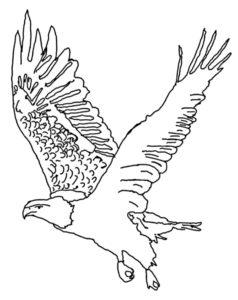 Орел картинки раскраски (22)
