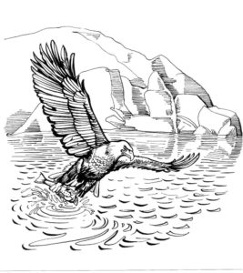 Орел картинки раскраски (25)