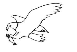 Орел картинки раскраски (26)