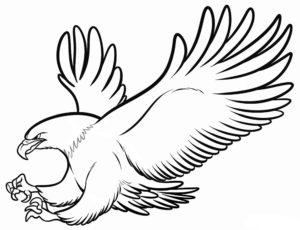 Орел картинки раскраски (28)