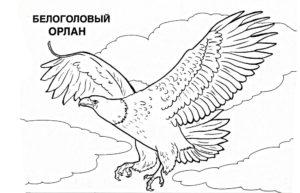 Орел картинки раскраски (29)