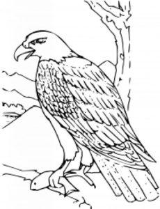 Орел картинки раскраски (3)