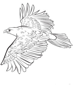 Орел картинки раскраски (30)