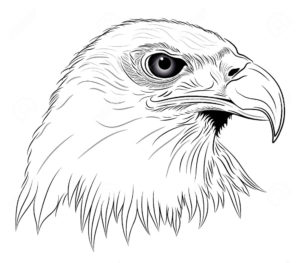 Орел картинки раскраски (33)