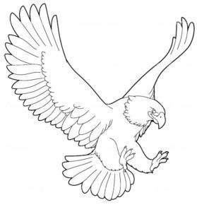 Орел картинки раскраски (35)