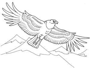 Орел картинки раскраски (36)