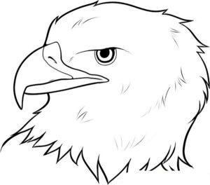Орел картинки раскраски (39)