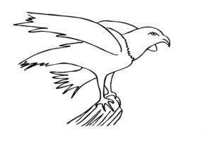 Орел картинки раскраски (4)