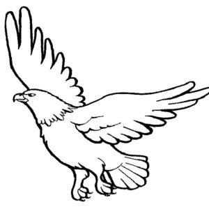 Орел картинки раскраски (40)