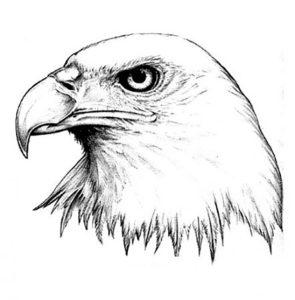 Орел картинки раскраски (41)