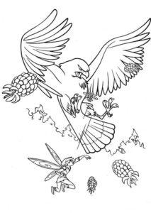 Орел картинки раскраски (42)
