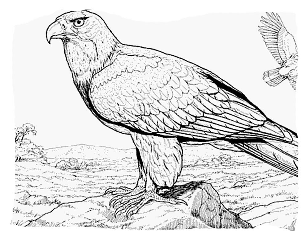 Орел картинки раскраски 43  Рисовака