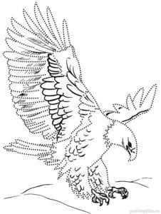 Орел картинки раскраски (5)