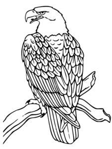 Орел картинки раскраски (50)