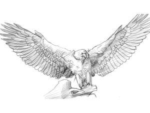 Орел картинки раскраски (51)