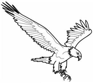 Орел картинки раскраски (52)