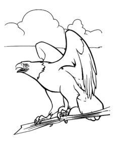 Орел картинки раскраски (53)