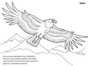 Орел картинки раскраски (55)