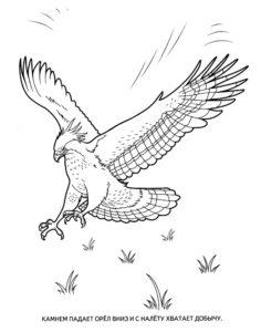 Орел картинки раскраски (57)