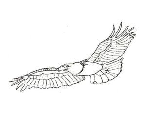 Орел картинки раскраски (61)