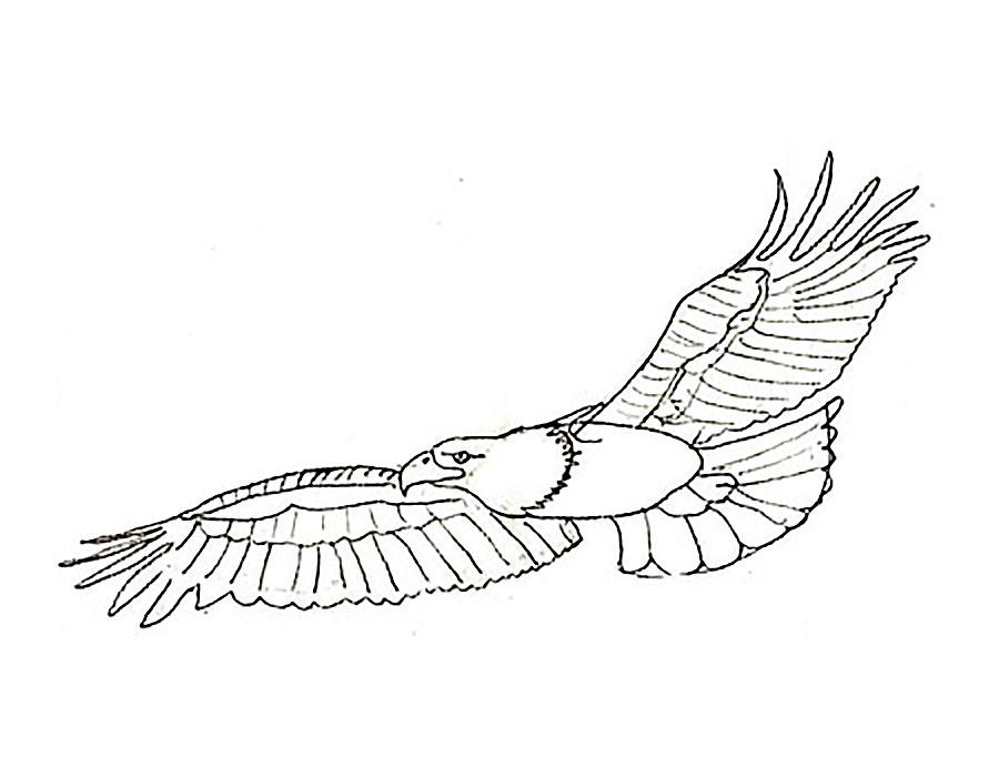 вид орел картинки из раскрасок столица