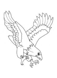 Орел картинки раскраски (62)