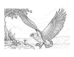 Орел картинки раскраски (9)